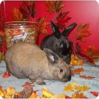 Adopt A Pet :: Hannah & Toodie - Roseville, CA