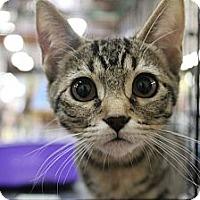 Adopt A Pet :: Shilo - Santa Monica, CA