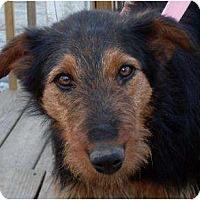 Adopt A Pet :: Ariel - Harrison, AR