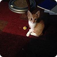 Adopt A Pet :: Razor - Pace, FL