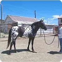 Adopt A Pet :: Bogie - Durango, CO
