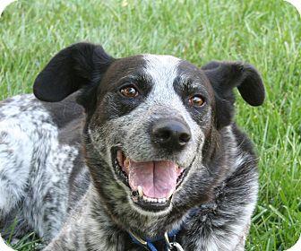 Australian Cattle Dog Mix Dog for adoption in Nampa, Idaho - ROCKY