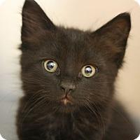 Adopt A Pet :: Poitier - Canoga Park, CA