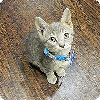 Adopt A Pet :: Tornado - The Colony, TX
