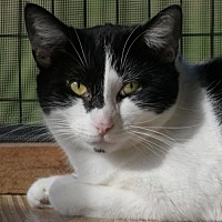 Adopt A Pet :: Maggie - North Fort Myers, FL
