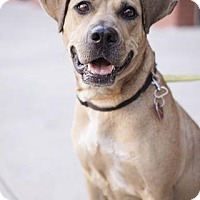 Adopt A Pet :: Nala - Brooklyn, NY