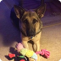 Adopt A Pet :: Asha - Fort Worth, TX