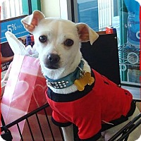 Adopt A Pet :: Asiago - Las Vegas, NV
