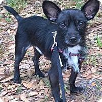 Adopt A Pet :: Henry 2 - Orlando, FL