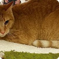 Adopt A Pet :: Buddy - Jackson, NJ