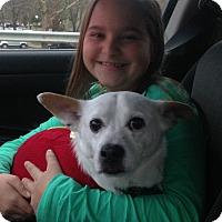 Adopt A Pet :: Joey - Blue Bell, PA