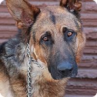 Adopt A Pet :: Charlie von Coburg - Los Angeles, CA