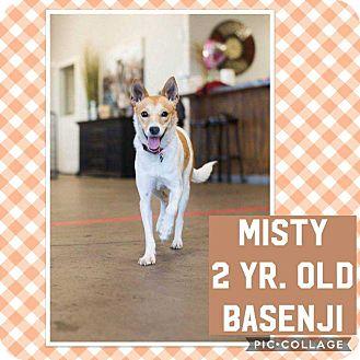 Basenji/Shepherd (Unknown Type) Mix Dog for adoption in Mesa, Arizona - MISTY