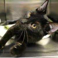 Adopt A Pet :: Lucky - St. Petersburg, FL
