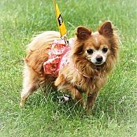 Adopt A Pet :: Lucy - Bealeton, VA