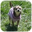 Photo 4 - Chihuahua Dog for adoption in Westfield, Indiana - Daisy