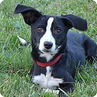 Adopt A Pet :: Maggie - Mocksville, NC