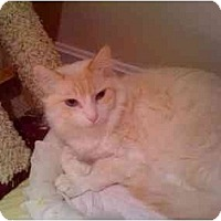 Adopt A Pet :: Swirl - Howell, NJ