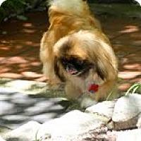Adopt A Pet :: Jazzy Lee - Richmond, VA
