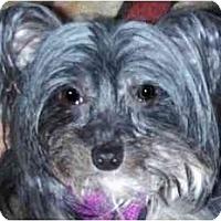 Adopt A Pet :: Mitzi-NY - Edmeston, NY