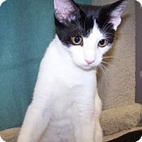 Adopt A Pet :: K-RonB4-Petey - Colorado Springs, CO