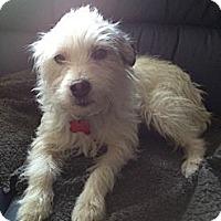 Adopt A Pet :: R.I. MARI - W. Warwick, RI