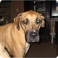 Adopt A Pet :: Rocco - Tallahassee, FL