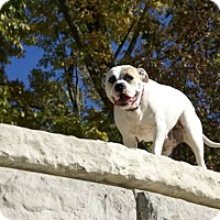 Adopt A Pet :: Lilly - Cedar Rapids, IA