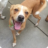 Adopt A Pet :: Frankie*ADOPTED!* - Chicago, IL