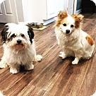 Adopt A Pet :: Sasha & Domino