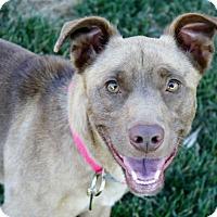 Adopt A Pet :: Elliott - Great dog! Read bio! - Los Angeles, CA