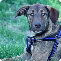 Adopt A Pet :: Loka - Regina, SK