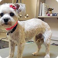Adopt A Pet :: 350930 - Wildomar, CA
