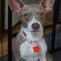 Adopt A Pet :: Scotchie - Holly Springs, NC