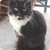Adopt A Pet :: Tuxedo - Miami, FL