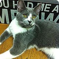 Adopt A Pet :: ASHE - Phoenix, AZ