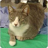 Adopt A Pet :: Dr. Who - Modesto, CA