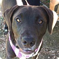 Adopt A Pet :: Cocoa - Wimberley, TX