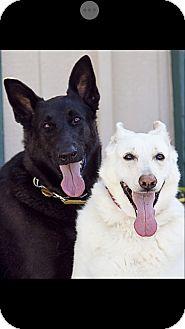German Shepherd Dog Mix Dog for adoption in Fallbrook, California - Zoey