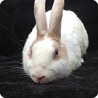 Adopt A Pet :: Othello - Watauga, TX