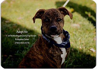 Hound (Unknown Type) Mix Dog for adoption in Zanesville, Ohio - Kismit - ADOPTED!