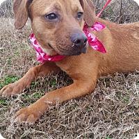 Adopt A Pet :: ATHENA - Cleveland, MS