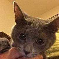 Adopt A Pet :: Dawsyn - LaJolla, CA