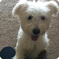 Adopt A Pet :: J - Kansas city, MO