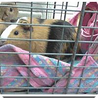 Adopt A Pet :: *Urgent* Pancake & Cheerio - Fullerton, CA