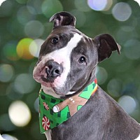 Adopt A Pet :: Brock - Chico, CA