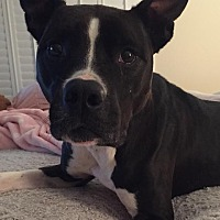 Adopt A Pet :: Risk (now known as Belle) the Black&White Beauty*F - Sanford, FL