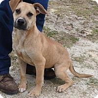 Adopt A Pet :: Rocky - Melrose, FL