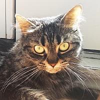 Adopt A Pet :: Hobby - Toronto, ON