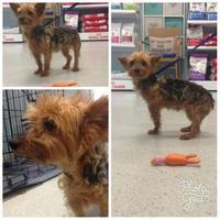 Adopt A Pet :: Gracie - Gainesville, FL